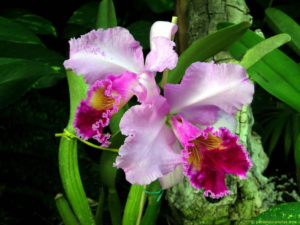 Estas flores son muy simbolicas para nuestro pais colombiano,ya que ...